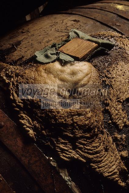 Europe/Belgique/Région de Bruxelles-Capitale/Bruxelles : Brasserie Gueuze Cantillon - Mousse de fermentation dans les caves