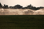 Irrigation of ... field