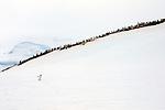 OOE12.11.13.OOE.D'Hainaut,Island  MikkelsenHarbour,Off the Beaten Track Expedition,