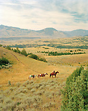 USA, Montana, wrangler leading horses through landscape, Gallatin National Forest, Emigrant