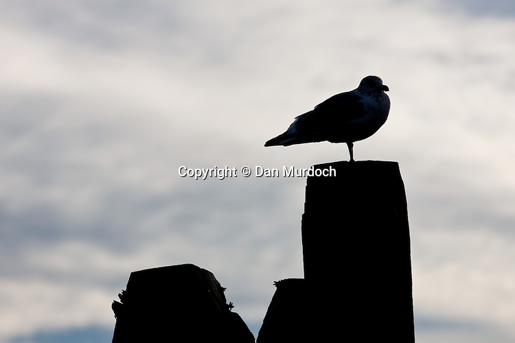 Seagull sitting on pile