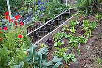 "Raised bed intensive organic vegetable garden with lettuces between wire support cages for peppers and drip irrigation lines; MUST CREDIT ""From the garden of Elvin Bishop""."