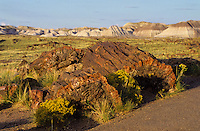 Petrified Forest national park in Arizona, USA