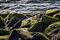 On mossy green rocks a black crow poses, backlit, with the rippling waters of San Francisco Bay in the background, at San Leandro Marina Park.