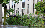 WATERBURY , CT-080420JS03—A large branch snapped off a tree at Grand Street and Cottage Place blocking the sidewalk as Tropical Storm Isaias tore through the region on Tuesday leaving a path of damage and many without power. <br /> Jim Shannon Republican-American