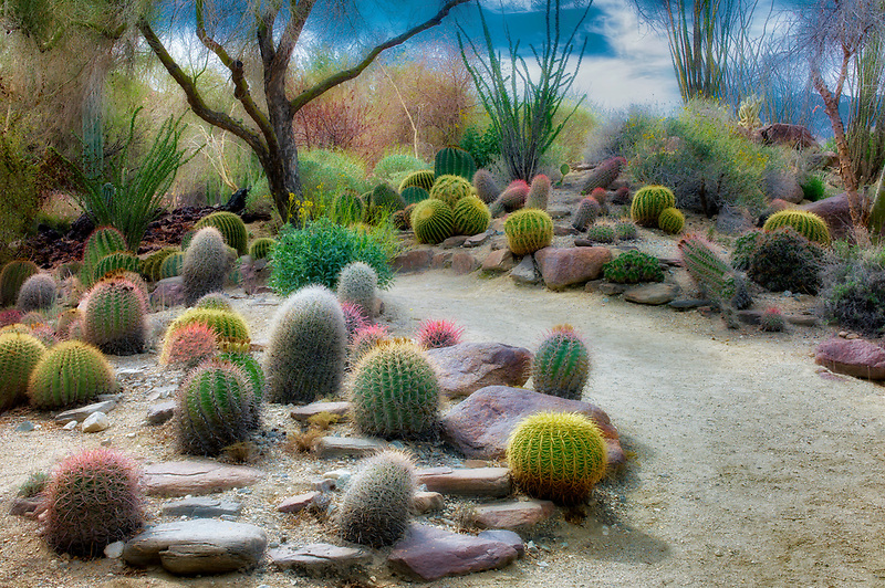 Cactus garden and path. The Living Desert. Palm Desert, California