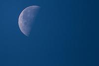 Luna ****<br /> The Moon is the only natural satellite of Earth. With an equatorial diameter km1 3474 is the solar system's largest satellite fifth, while as compared to the proportional size of its planet is the largest satellite: one quarter the diameter of Earth and 1/81 its mass.<br /> Una de las primeras lunas llenas del a&ntilde;o 2013 se pudo apreciar hoy  antes del anocecer sobre el cielo al  oriente de la ciudad de Hermosillo, Sonora.<br /> La Luna es el &uacute;nico sat&eacute;lite natural de la Tierra. Con un di&aacute;metro ecuatorial de 3474 km1 es el quinto sat&eacute;lite m&aacute;s grande del Sistema Solar, mientras que en cuanto al tama&ntilde;o proporcional respecto de su planeta es el sat&eacute;lite m&aacute;s grande: un cuarto del di&aacute;metro de la Tierra y 1/81 de su masa. **  Foto&copy; : LuisGutierrez **