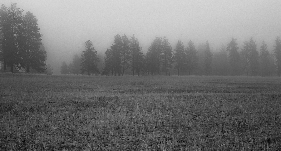 Fog rolls eerily through the trees on a remote farm in the Palouse of Eastern Washington State.