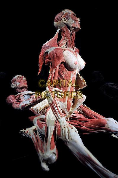 body worlds sex