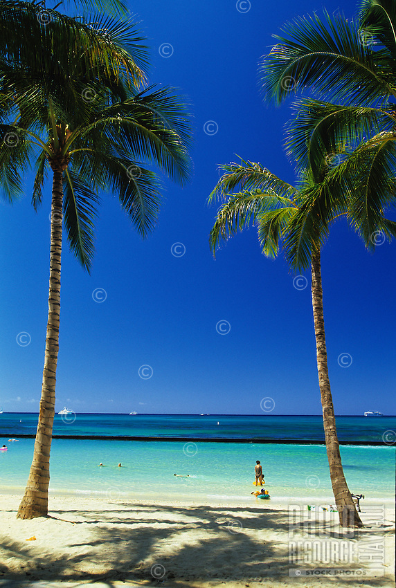 Palm trees and shadows in the early morning at Kuhio Beach, Waikiki, Oahu