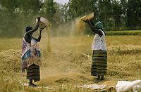 Farmer ventilano il riso per separarne la pula