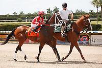 Tripski on post parade for the running of the Bob Umphrey Turf Sprint Stakes, Calder Race Course, Miami Gardens Florida. 07-07-2012.  Arron Haggart/Eclipse Sportswire.