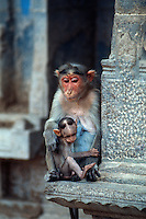 Indien, Madurai (Tamil Nadu), Affe imSri Meenakshi Tempel