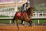 RIYADH,SAUDI ARABIA-FEB 27:  True Self excercises for Longines Turf Handicap at King Abdulaziz Racetrack on February 28,2020 in Riyadh,Saudi Arabia. Kaz Ishida/Eclipse Sportswire/CSM
