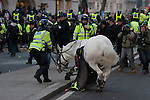 A panicking police horse is brought under control by policeman after it's rider sustained serious injuries during the fourth student protest in Parliament Square. 09/12/10
