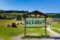 Oesterreich, Salzburger Land,  bei Abtenau: Wandergebiet Postalm, Oesterreichs groesstes Almengebiet | Austria, Salzburger Land, near Abtenau: Postalm hiking region, Austria's largest alpine pasture