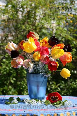 Helga, FLOWERS, portrait, macro, photos, DTTH, DTTH5878,#F# Blumen, flores, retrato