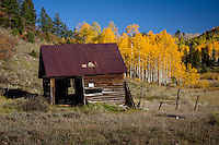 Old building against changing Aspen trees in the San Jaun Mountains near Telluride Colorado.