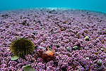 Underwater Wrecks & reefs