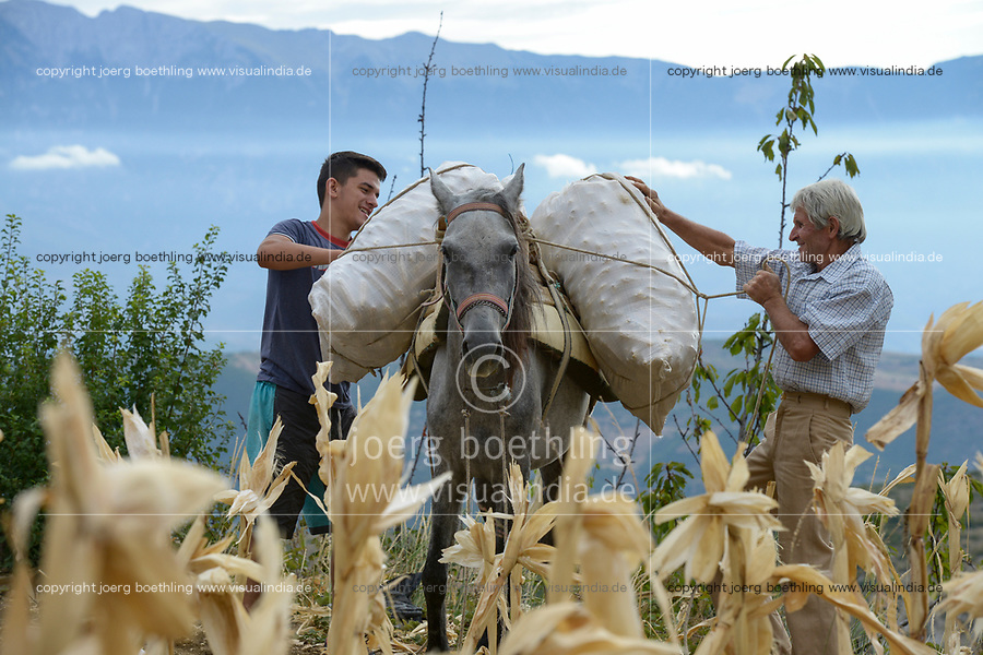 ALBANIA, Berat , small scale farmer harvest maize in the mountains / ALBANIEN, Berat, Kleinbauern ernten Mais in den Bergen