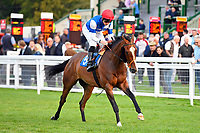 Horatio Star ridden by Jason Watson goes down to the start of The Meachers Global Classic Supporting Gift Of Sight Handicapi during Evening Racing at Salisbury Racecourse on 3rd September 2019
