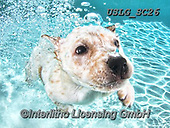 REALISTIC ANIMALS, REALISTISCHE TIERE, ANIMALES REALISTICOS, dogs, paintings+++++SethC_Corey_IMG_4402rev2neweyeBOOK2,USLGSC26,#A#, EVERYDAY ,underwater dogs,photos,fotos ,Seth