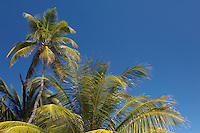 Palm trees on Laughing Bird Cay, Placencia, Belize