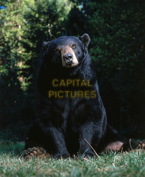 GENTLE BEN 2     TV, 2003...GENTLE BEN.Filmstill - Editorial Use Only .Ref: FB .www.capitalpictures.com.sales@capitalpictures.com.Supplied by Capital Pictures