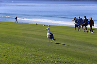 Seamus Power (IRL) walks down the 10th hole at Pebble Beach course during Friday's Round 2 of the 2018 AT&amp;T Pebble Beach Pro-Am, held over 3 courses Pebble Beach, Spyglass Hill and Monterey, California, USA. 9th February 2018.<br /> Picture: Eoin Clarke | Golffile<br /> <br /> <br /> All photos usage must carry mandatory copyright credit (&copy; Golffile | Eoin Clarke)