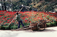 A boy uses a primitive and strenous method to water the flowers in some public gardens in Hangzhou.