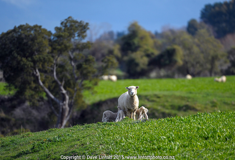 Masterton District Council photoshoot. Masterton, Wairarapa, New Zealand on Tuesday, 25 August 2015. Photo: Dave Lintott / lintottphoto.co.nz