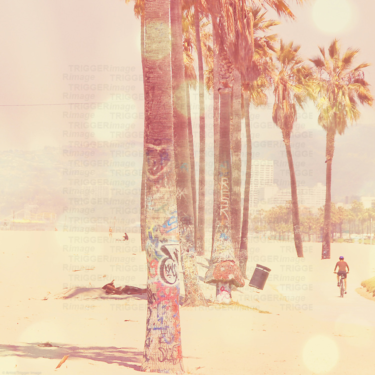 a sunny day in Venice Beach California with palm trees