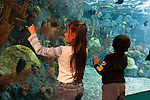Aquarium of the Pacific Photo Gallery