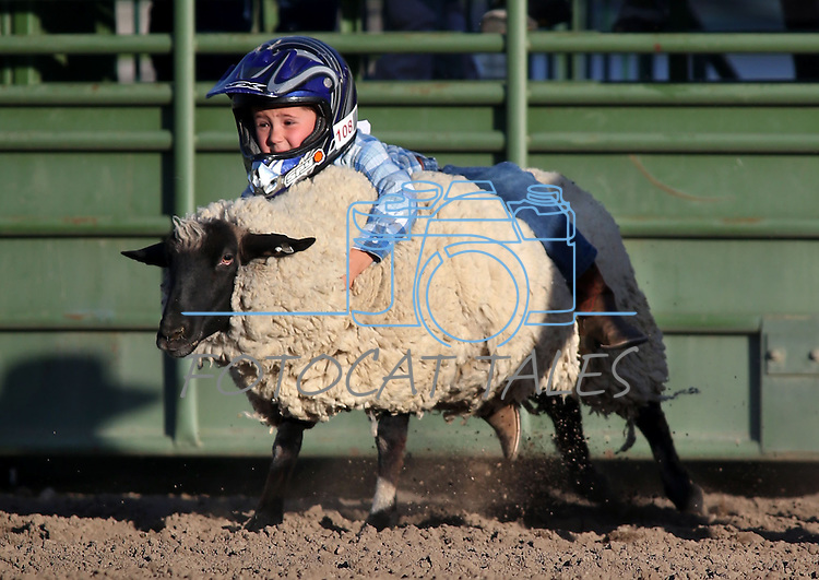 Kash Hinkey, of Reno, competes in the Mutton Bustin' portion of the Smackdown Tour Bull Riding event at Fuji Park in Carson City, Nev., on Saturday, June 7, 2014.<br /> Photo by Cathleen Allison