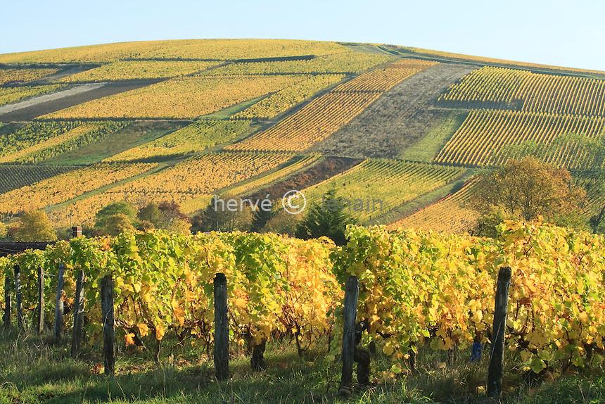 France, Cher (18), région du sancerrois, Reigny, vignoble en automne sancerre A.O.C. // France, Cher, Sancerre region, Reigny, Sancerre vineyards in autumn