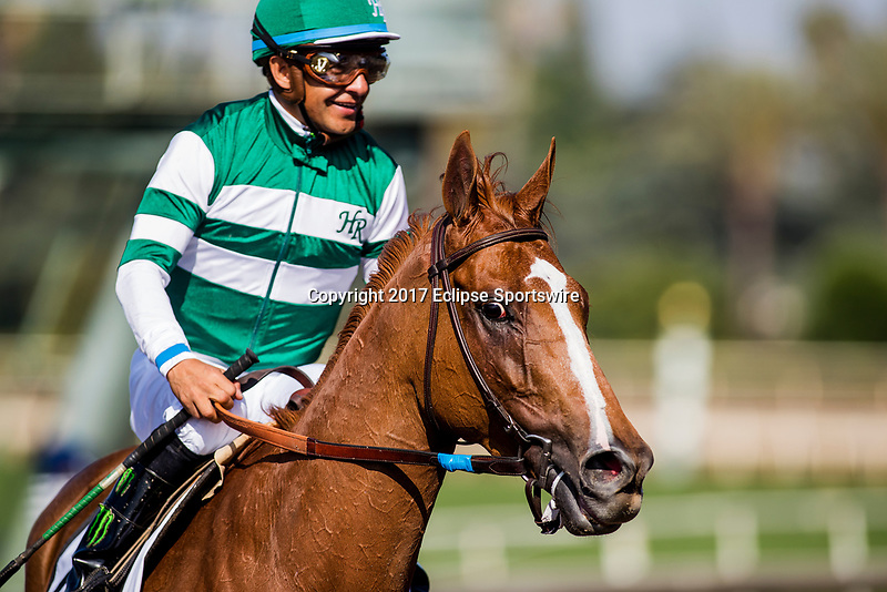 ARCADIA, CA - JUNE 03: Stellar Wind #2 with Victor Espinoza after the Beholder Mile Stakes at Santa Anita Park  on June 03, 2017 in Arcadia, California. (Photo by Alex Evers/Eclipse Sportswire/Getty Images)