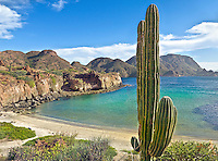 Wild Beach, Baja