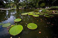 Rio de Janeiro_RJ, Brasil...Jardim Botanico do Rio de Janeiro...The  Botanical garden in Rio de Janeiro...Foto: JOAO MARCOS ROSA / NITRO..Foto: JOAO MARCOS ROSA / NITRO