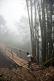 INDONESIA, Flores, a woman ventures across a bamboo walking bridge on the way to Wae Rebo Village