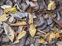 Yes, I took time to photograph fallen leaves and mushrooms.