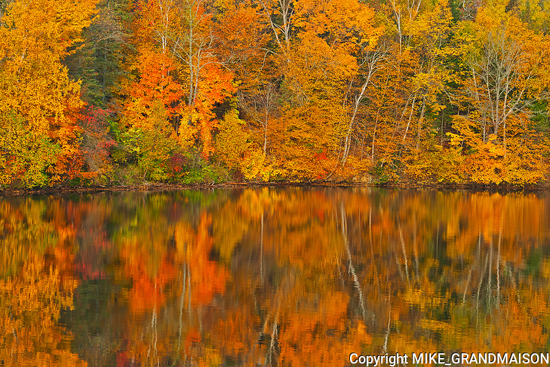Acadian forest in autumn foliage reflected in the Saint John River <br />