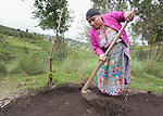 Teresa Diaz prepares a raised garden bed where she will plant seeds in a shared vegetable garden in San Luis, a small Mam-speaking Maya village in Comitancillo, Guatemala. Women in the community have worked together on several agricultural and animal raising projects with help from the Maya Mam Association for Investigation and Development (AMMID).