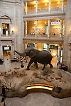 Smithsonian Museum of Natural History, Stuffed African elephant in lobby, Washington, DC, dc124465