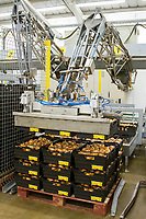 Robot stacking onion traysonto a pallet in a packhouse