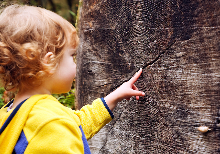 Four year old girl pointing to tree rings, Cascade Mountains, Washington, USA
