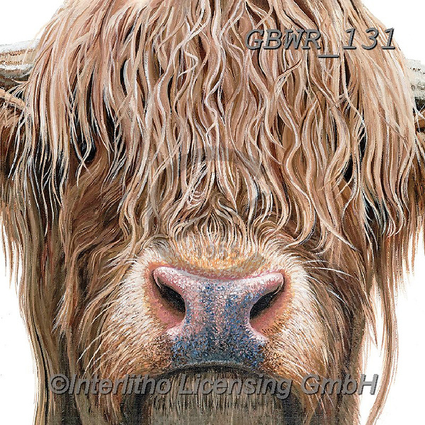 Simon, REALISTIC ANIMALS, REALISTISCHE TIERE, ANIMALES REALISTICOS, paintings+++++Card_OliviaH_HighlandCow,GBWR131,#a#, EVERYDAY,cow