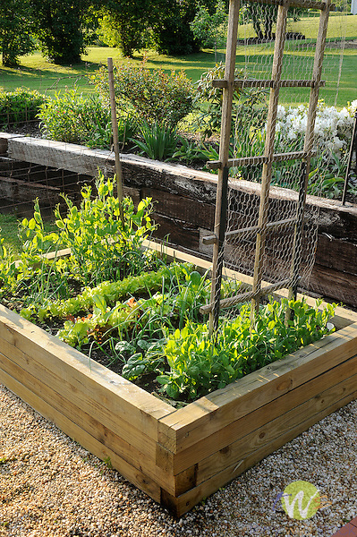 Raised bed garden with spring vegetables.