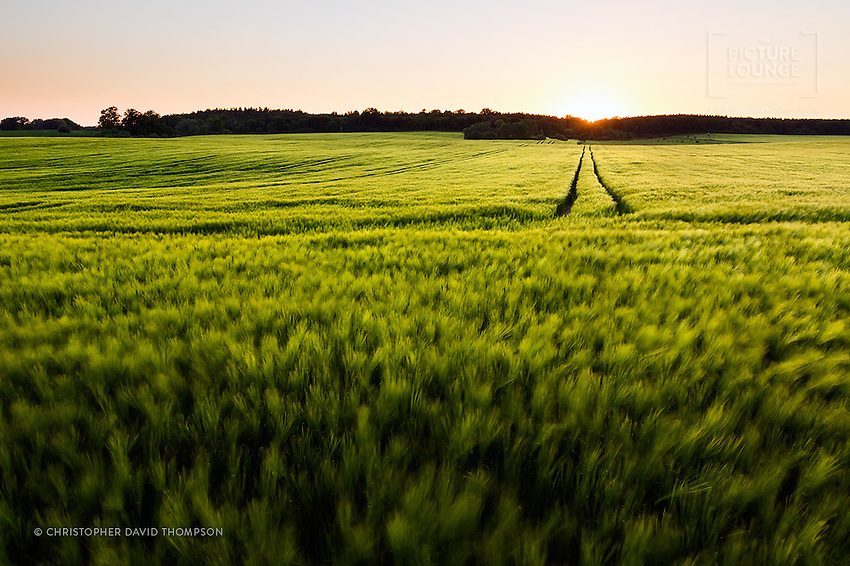 A stunning evening in the German countryside, as the sun sets over the green spring fields in north eastern Germany.
