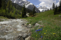 Alpine streams. The  Hahntenjoch pass between Imst and Reutte, Austria, the Alps.