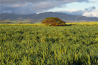 Sugar cane fields<br />
